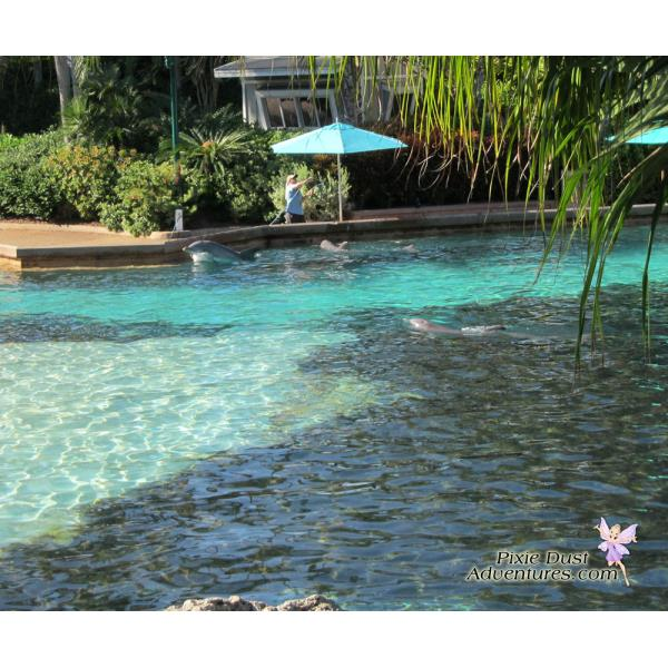 Dolphin-Pool-02