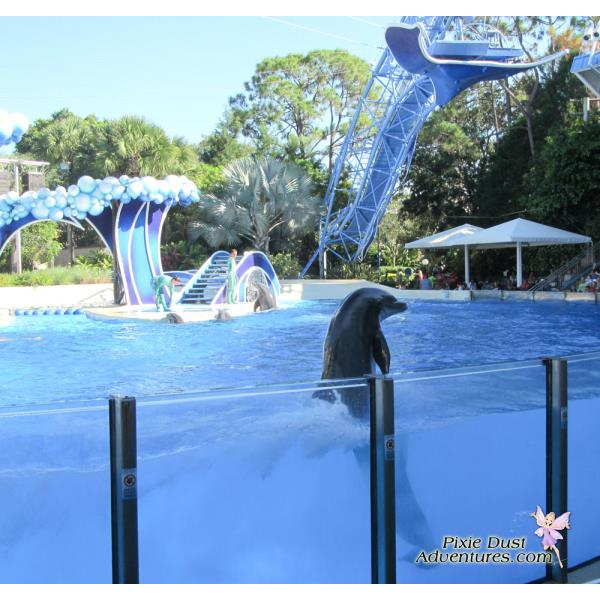 Dolphin-show-04