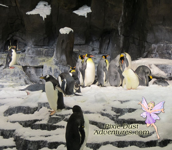 AntarcticaPenguins1