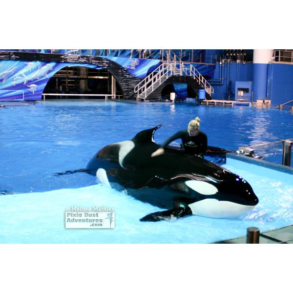 Orca Whales2