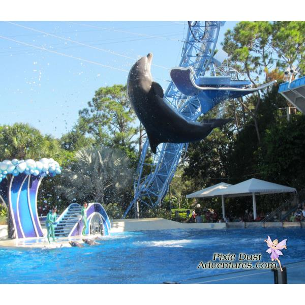 Dolphin-show-03